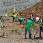 "Leaving a ""greener"" Canatuan: Tree planting at the minesite. TVIRD, like the rest of the member companies of the Chamber of Mines of the Philippines, is a prolific re-forester."