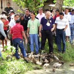 Below: Cerilles (center, in blue) along with key officers of TVIRD release ducks into the rice fields owned by an Integrated Rice-Duck Farming System beneficiary in Barangay Dipili, town of Bayog.  Flanking him are (from L to R): TVIRD Operations VP Jake Foronda and Plant OIC Col. Valentino Edang.