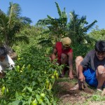 2	Upland farming. Largely agricultural towns, Siocon and Baliguian flourish with rolling terrain and fertile land that are conducive for upland farming.  With help from TVIRD, more local farmers are able to imbibe on a lucrative livelihood.