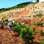 Back to life. TVIRD Environment personnel plant trees in the mine pit after meticulous soil conditioning. To date, the company has planted a total of 380 thousand trees within and outside its mine concession area.