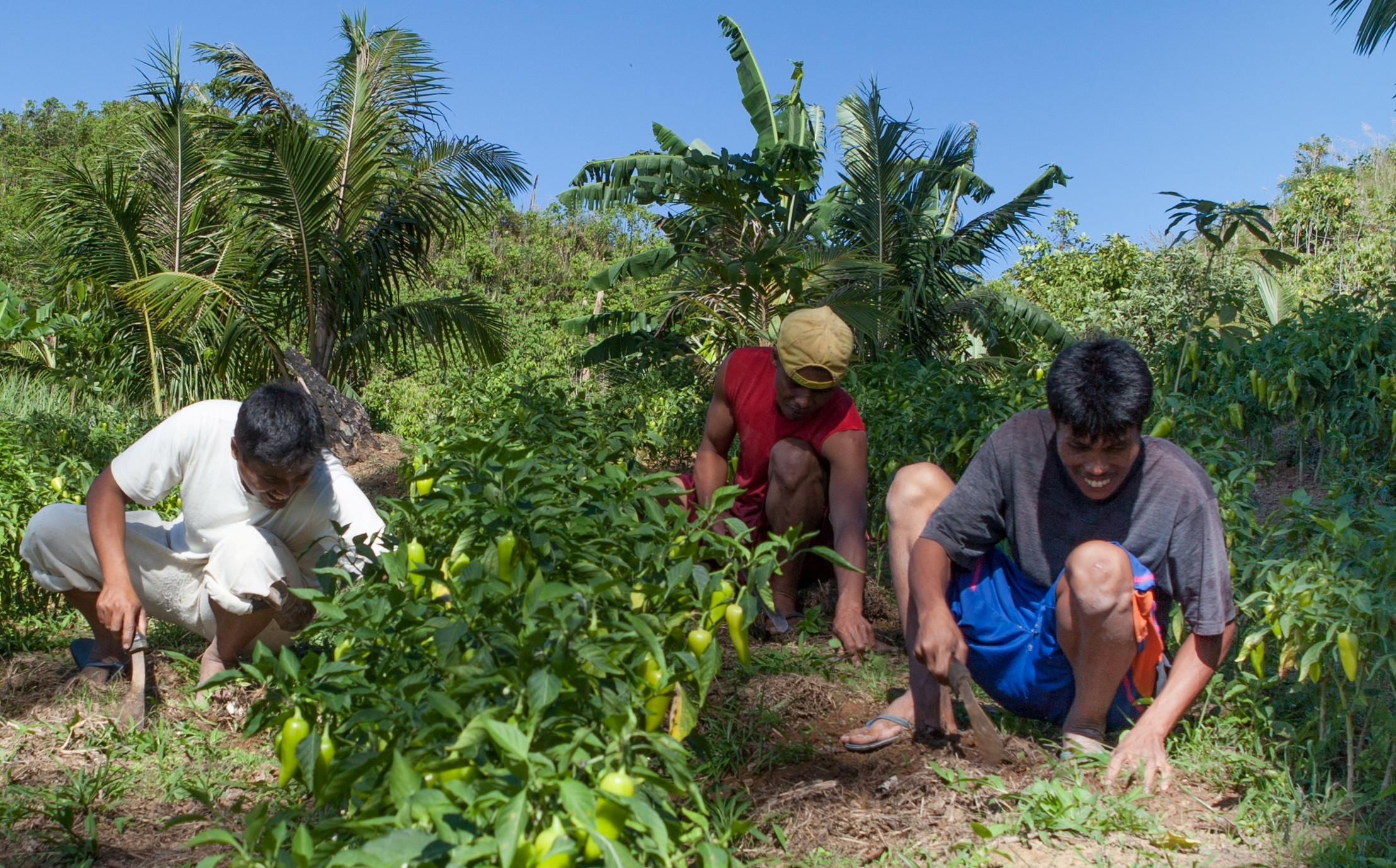 Zamboanga Farmer earns Php40k monthly from a small garden | TVI
